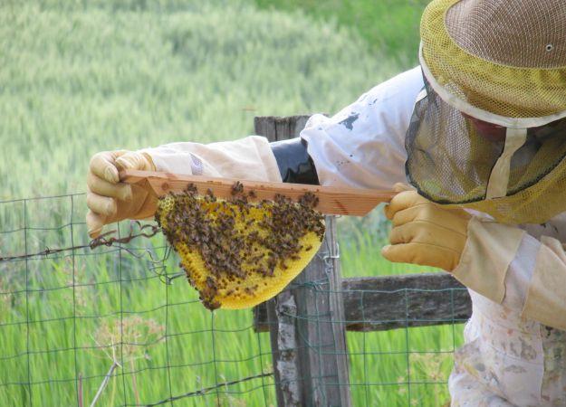 Top Bar Honey Comb