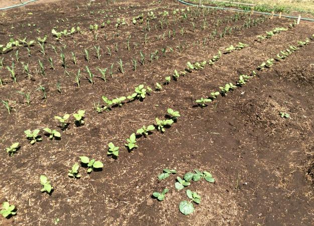A Garden Just Starting To Grow