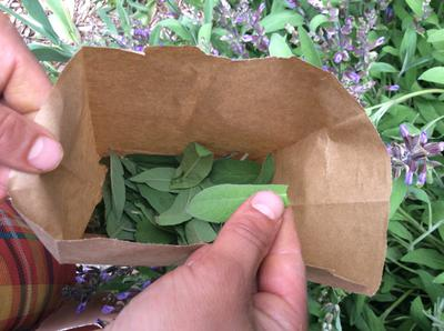 Put Leaves into Bags