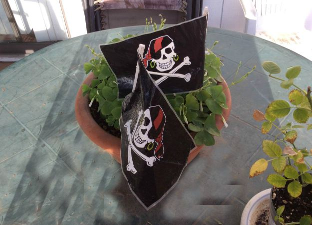 Pirate Flags In Plant